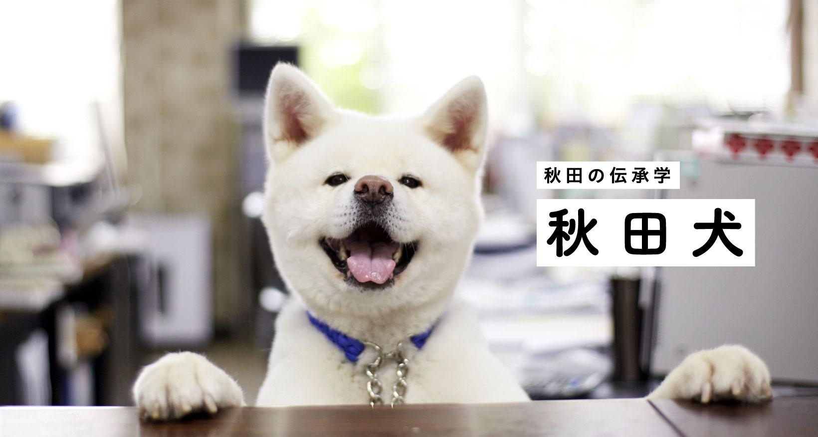 秋田の伝承学 秋田犬