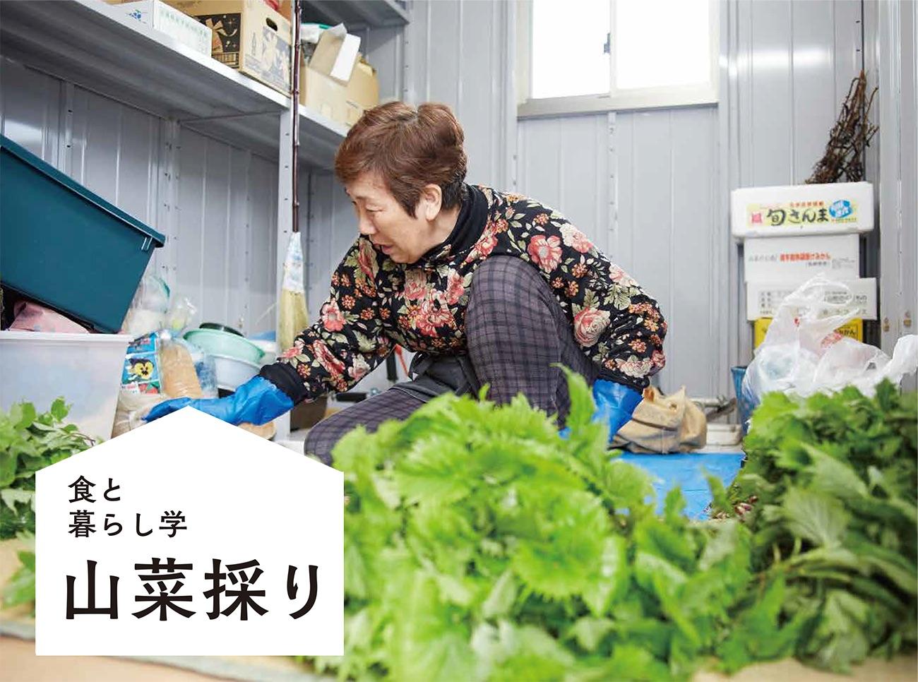 食と暮らし学 山菜採り